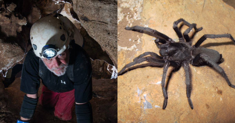Real-life Spider-Man: New tarantula species named after Eagle Scout caver Bill Steele
